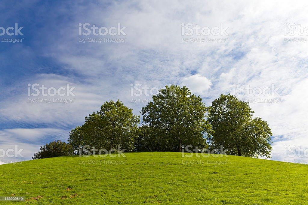 Grove royalty-free stock photo