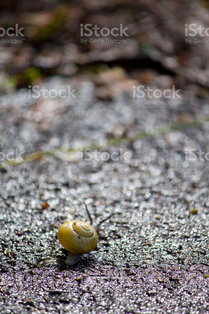 Grove snail royalty-free stock photo