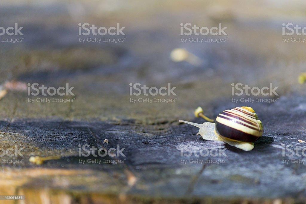 Grove snail stock photo