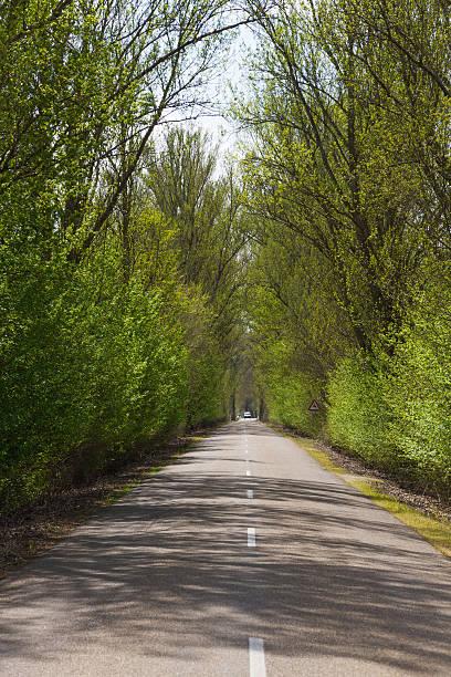 grove tunnel in highway - tunel de arboleda en carretera - dotted line stock photos and pictures