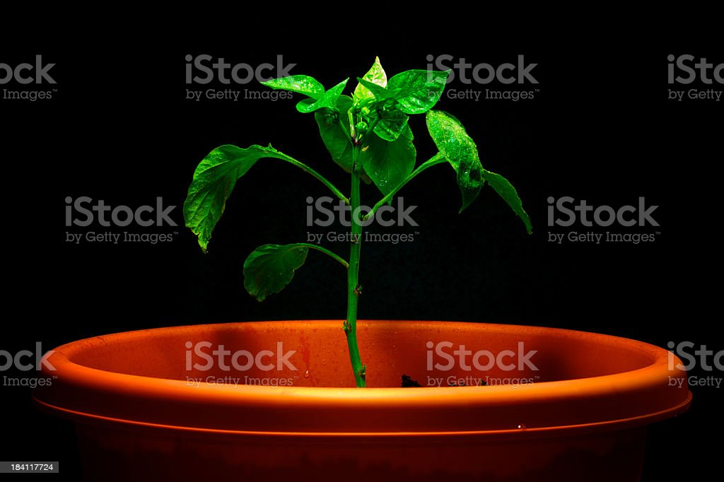 Grow green stock photo