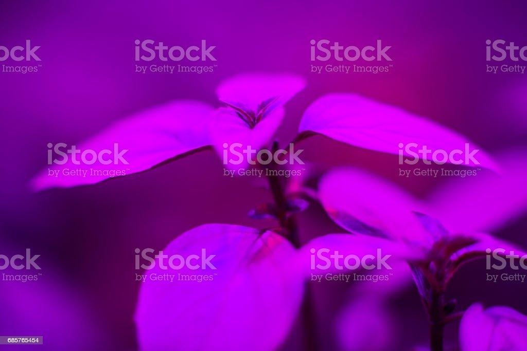 LED Grow Light royalty-free stock photo