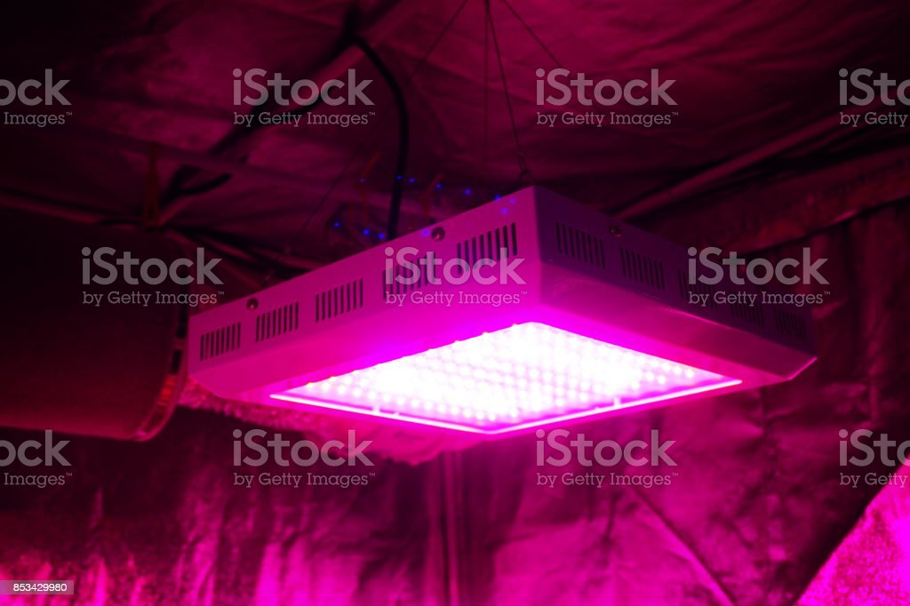 LED grow light stock photo
