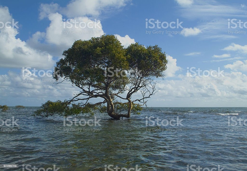 Grow where You are planted royalty-free stock photo