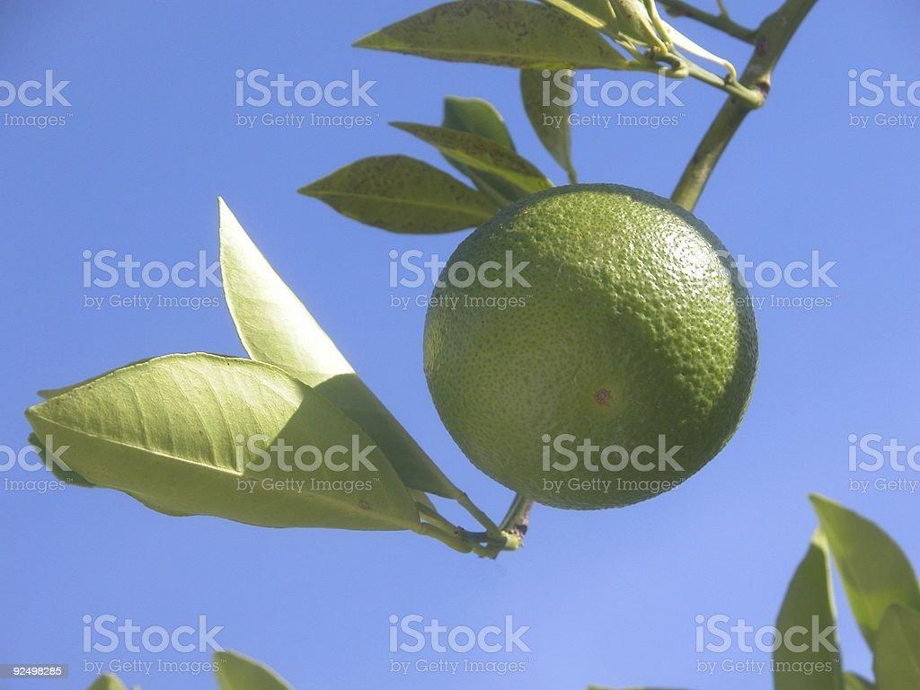 growing an orange royalty-free stock photo