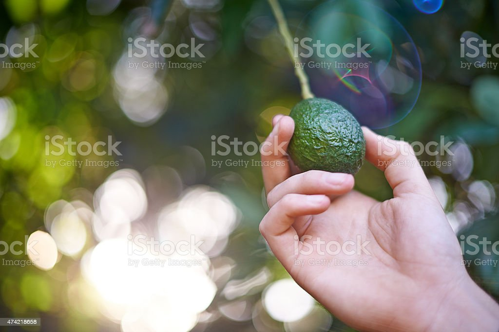 Growing at the perfect rate stock photo