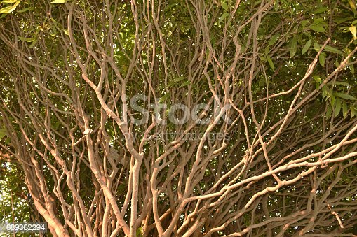 175407085 istock photo Growing branches. 689362294