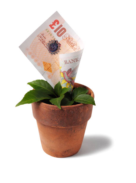 Growing British Ten Pound Note in a Plant Pot