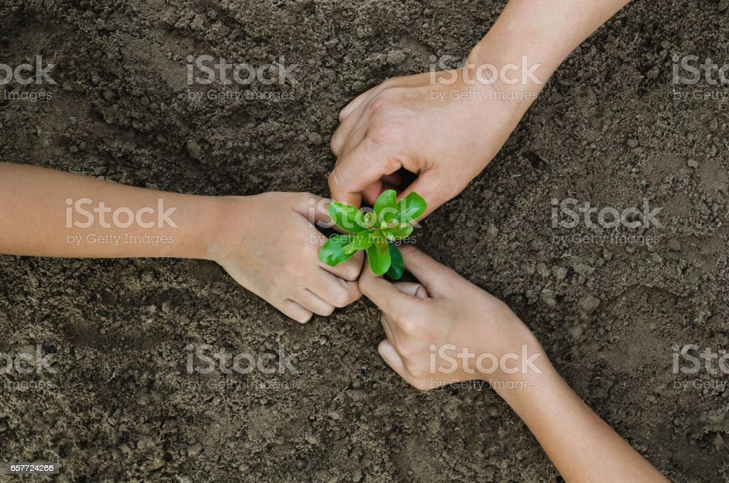 Growing concept eco Group three hand  children planting together stock photo