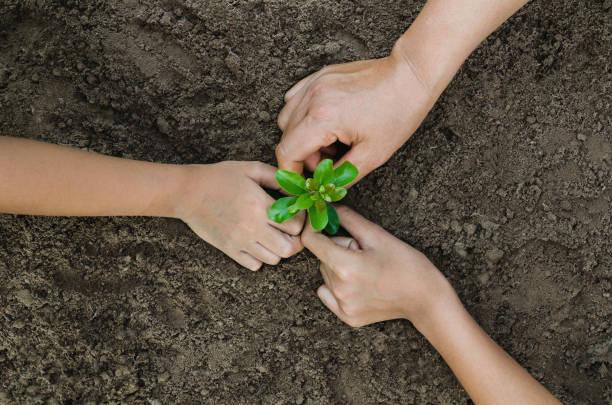 Wachstumskonzept Öko-Gruppe drei Hand-Kinder gemeinsam pflanzen – Foto