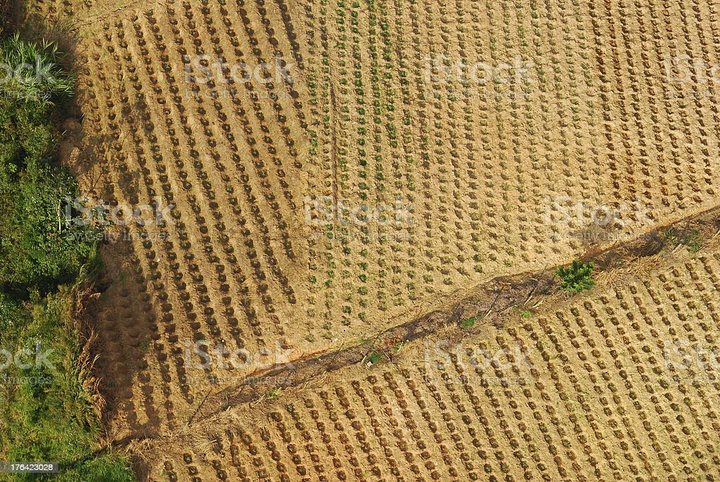 Growing crops in a field in Bucaramanga, Colombia stock photo