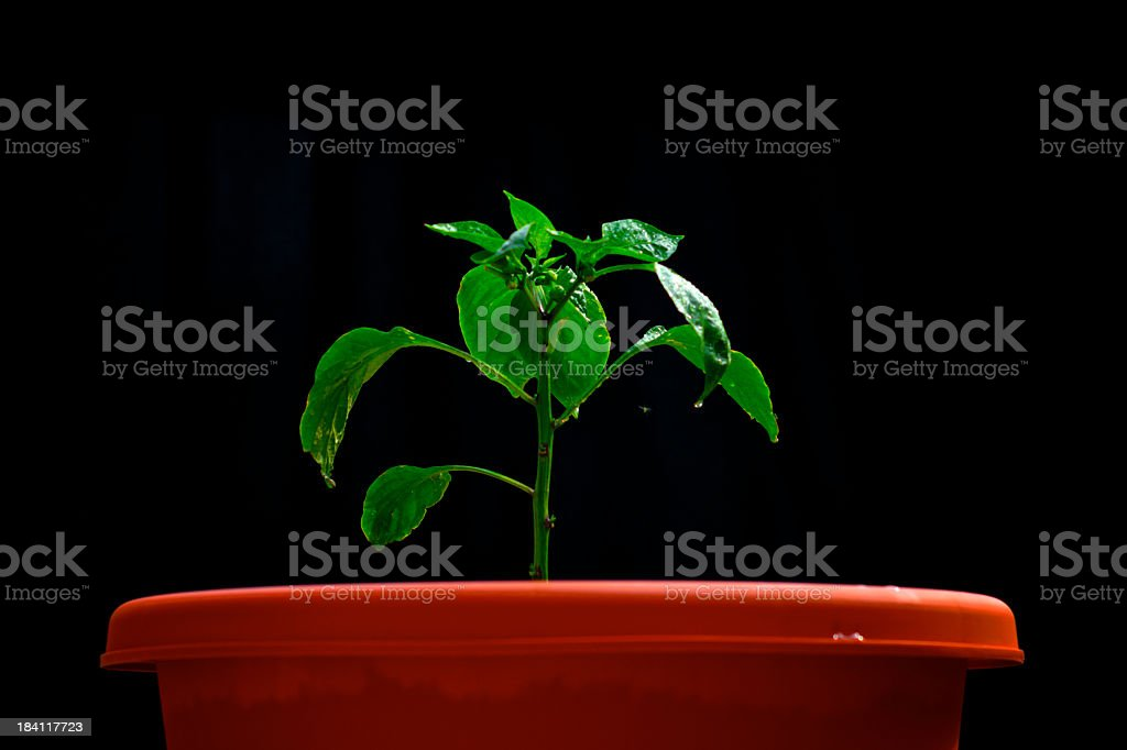 Growing green stock photo