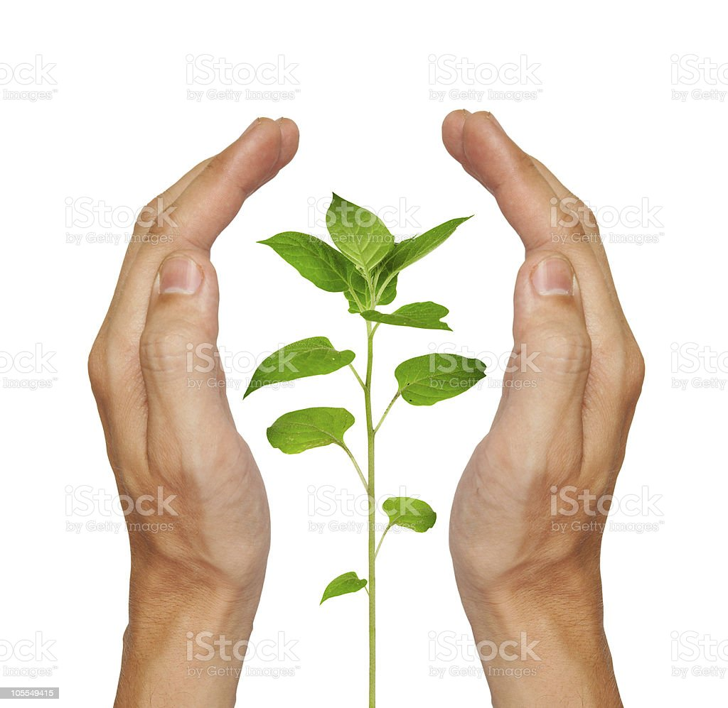 Growing green plant royalty-free stock photo