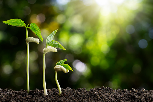 1139475964 istock photo Growing green sprout on blurred green bokeh background, environmental concept 1168198432