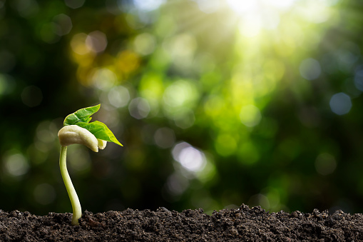 1139475964 istock photo Growing green sprout on blurred green bokeh background, environmental concept 1168200716