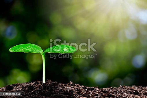 istock Growing green sprout with water drop on blurred green bokeh background with sunlight, environmental concept 1139475964