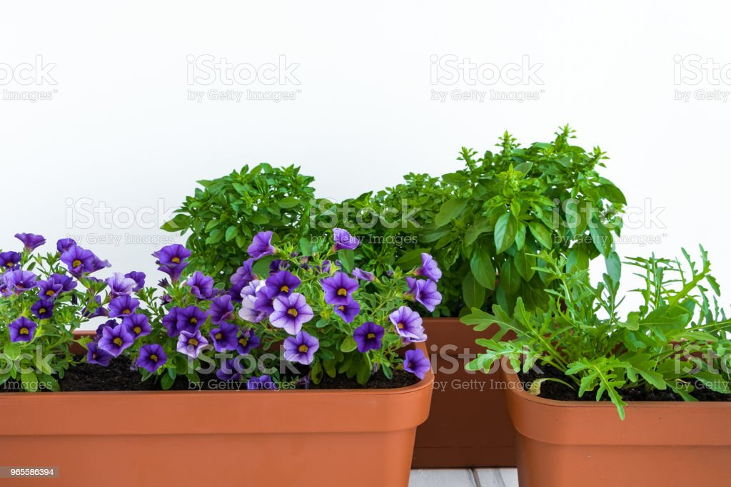 Growing Herbs And Flowers In Planters In A Kitchen Garden Flower