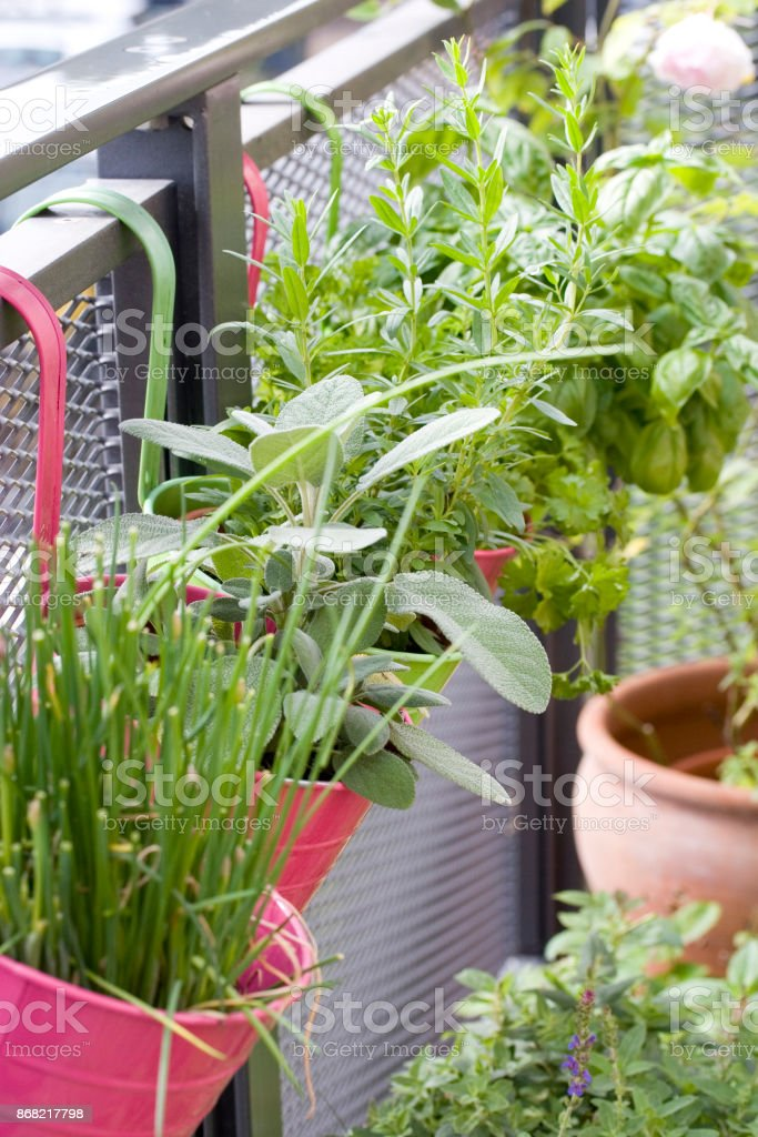 Close up of different fresh herbs, growing in pots on the balcony in...