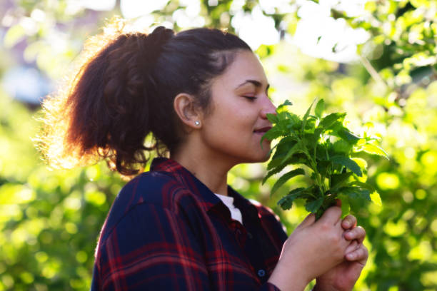 Growing herbs: Young hispanic woman holding a bunch of lemon balm fresh from her herb garden stock photo