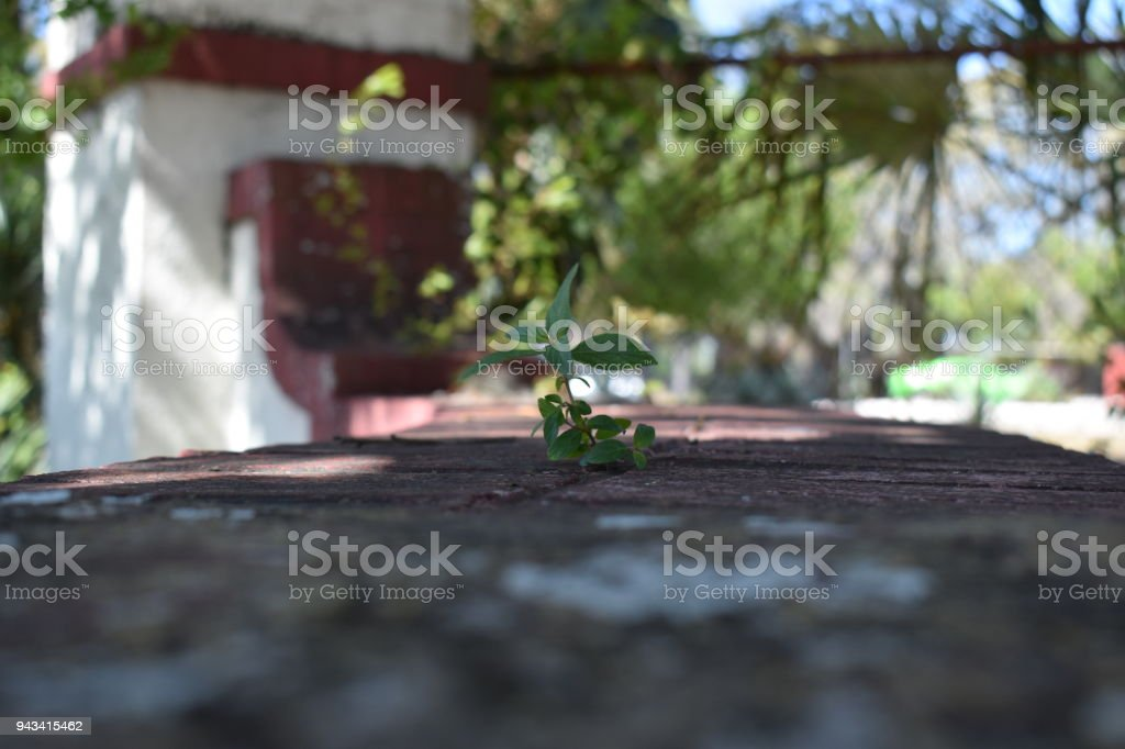 Growing in Bricks stock photo