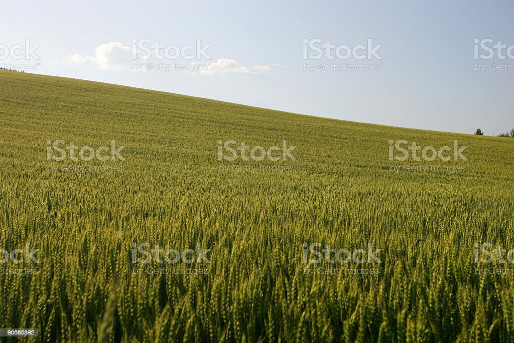 Growing landscape in Norway stock photo