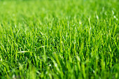 istock growing lawn, green lawn 1277723935