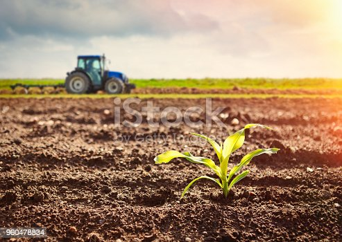 Detail of growing maize crop and tractor working on the field