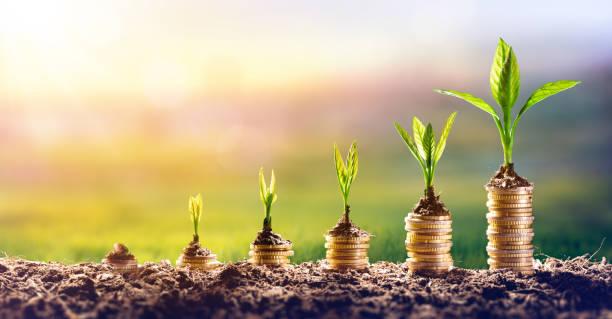 增長中的貨幣圖表-金融投資概念 - 成熟 個照片及圖片檔