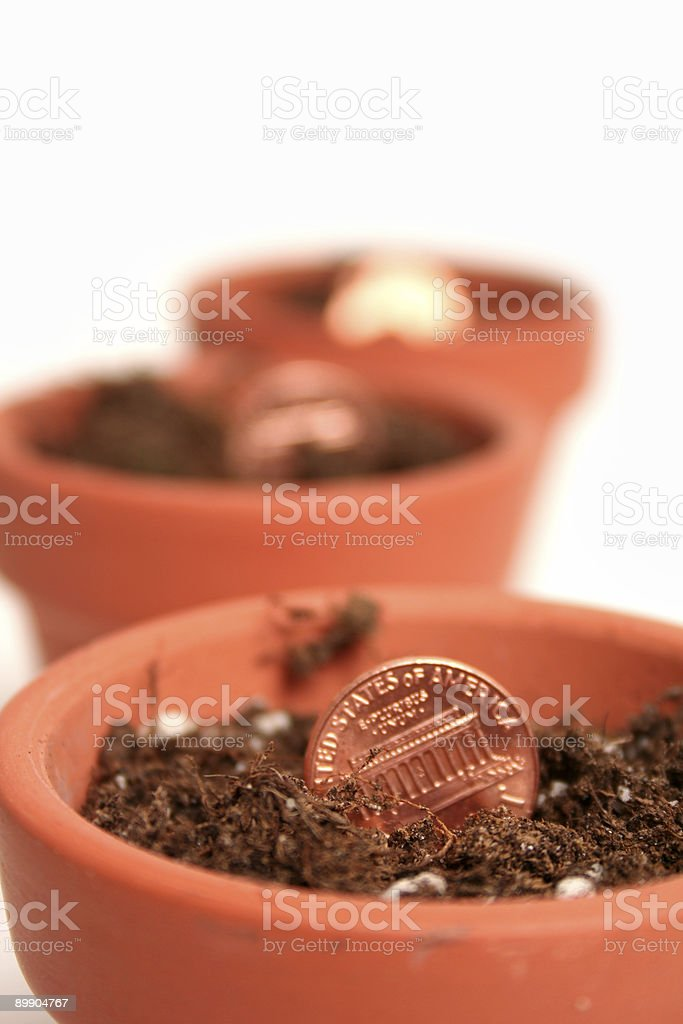 growing money royalty-free stock photo