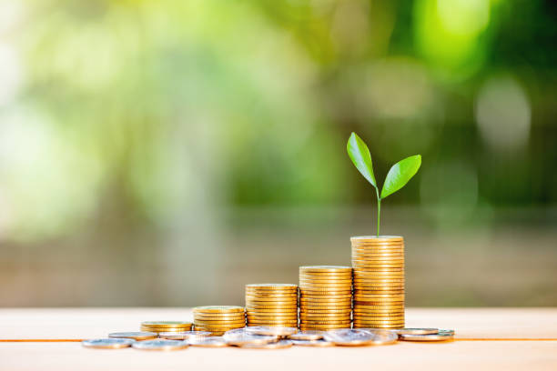 Growing Money - Plant On Coins - Finance And Investment Concept Growing Money - Plant On Coins - Finance And Investment Concept money tree stock pictures, royalty-free photos & images