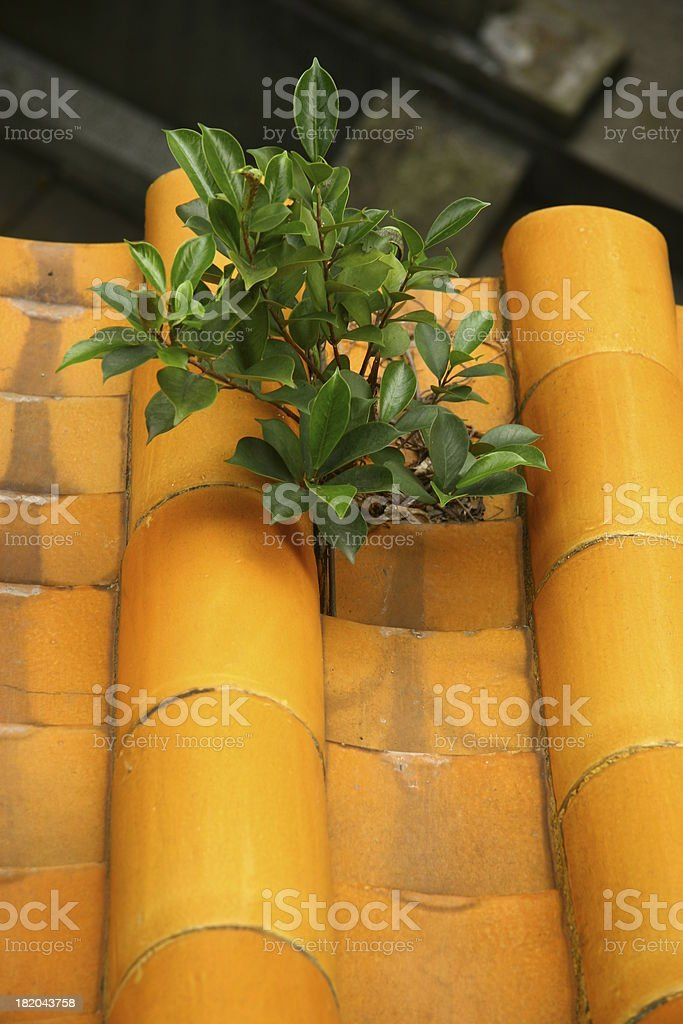 growing on the roof royalty-free stock photo