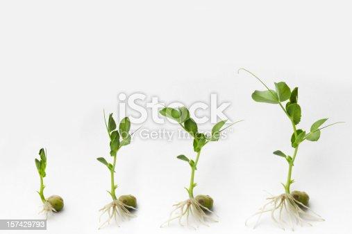 147512291 istock photo Growing 157429793
