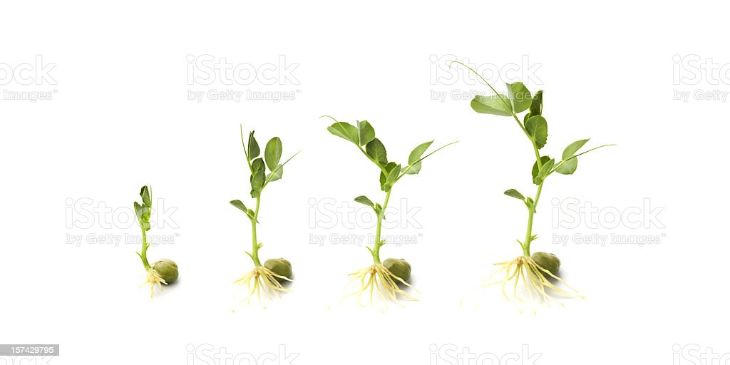 Growing royalty-free stock photo