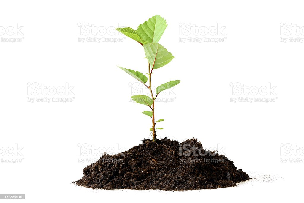 Growing Plant and Dirt royalty-free stock photo