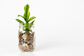 istock Growing plant from a jar full of coins 1097894578