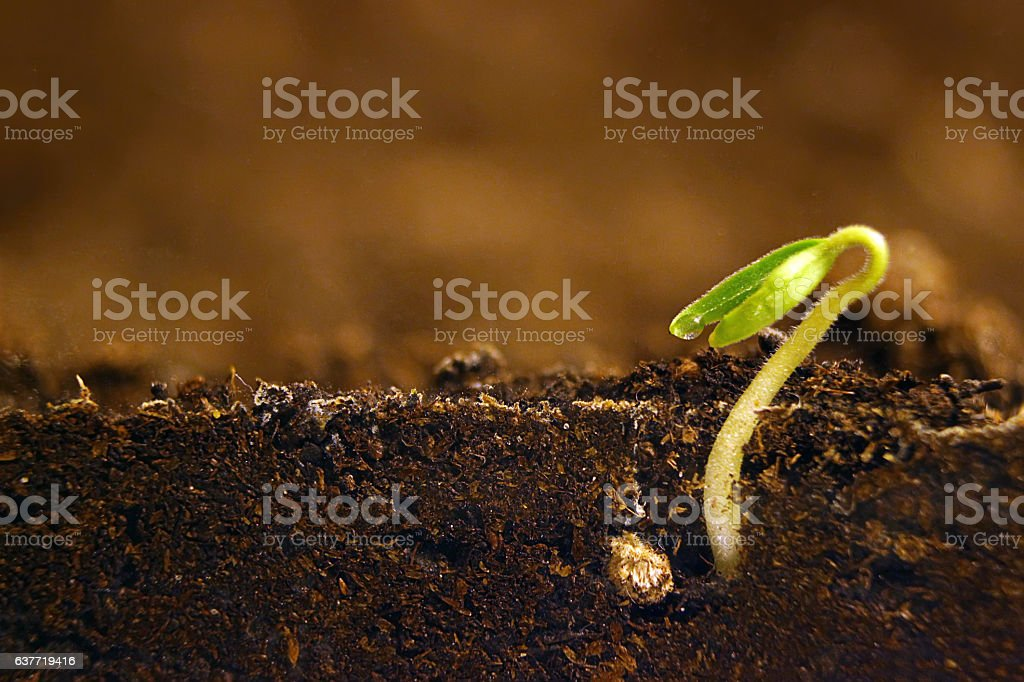 Growing plant. Green sprout growing from seed. stock photo