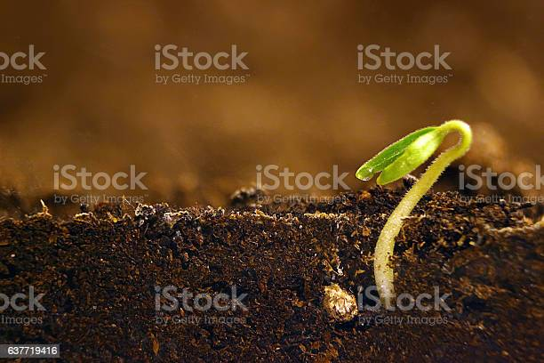 Photo of Growing plant. Green sprout growing from seed.
