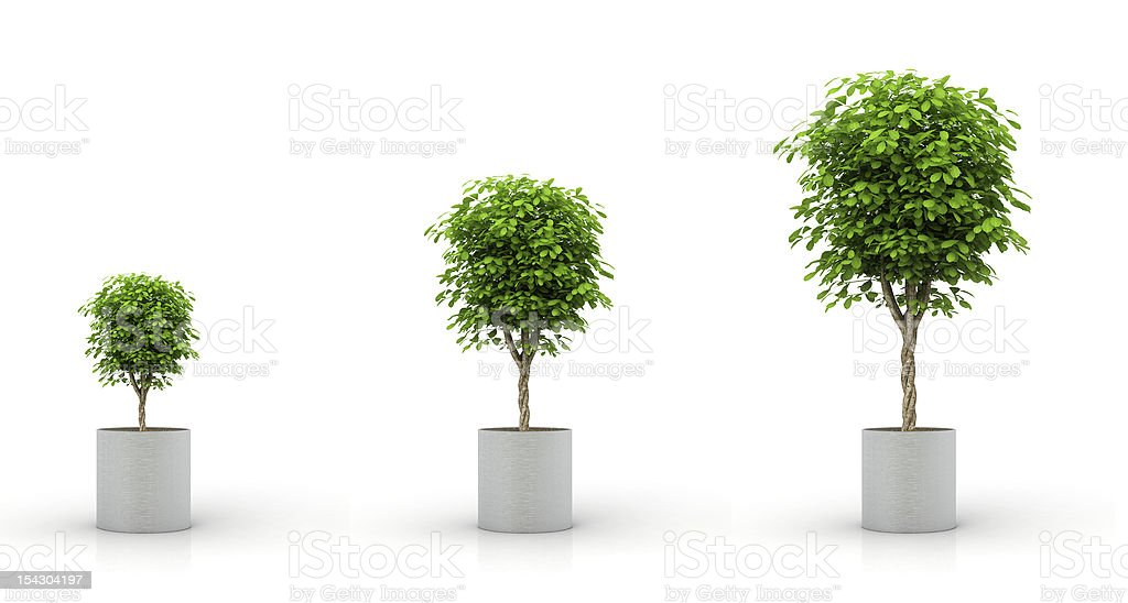 growing plant, isolated on white stock photo