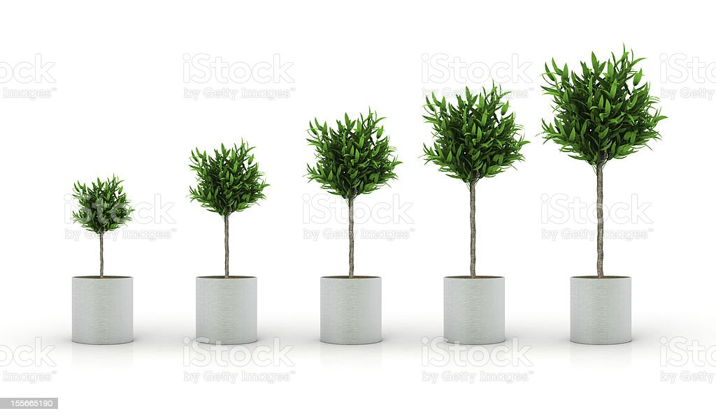growing plant, isolated on white royalty-free stock photo