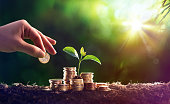 istock Growing Plant On Coins Money - Investment Concept 907280674