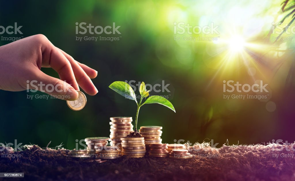 Growing Plant On Coins Money - Investment Concept stock photo