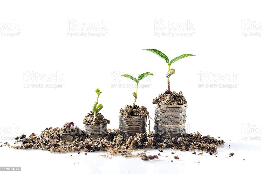 Growing Plant On Increasing Coin at White Background stock photo