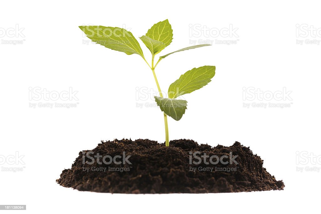 growing plant royalty-free stock photo