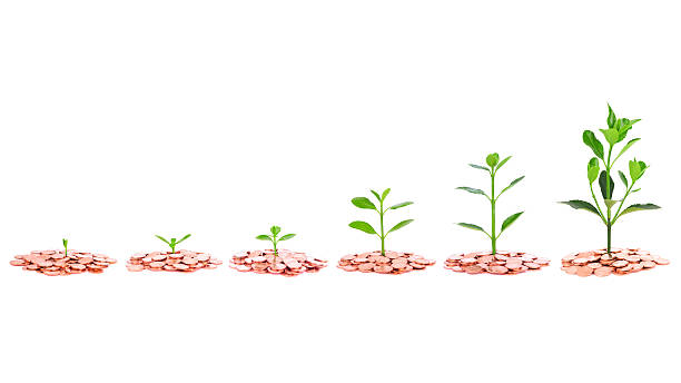 Growing Plant Sequence in coin isolate on white background stock photo