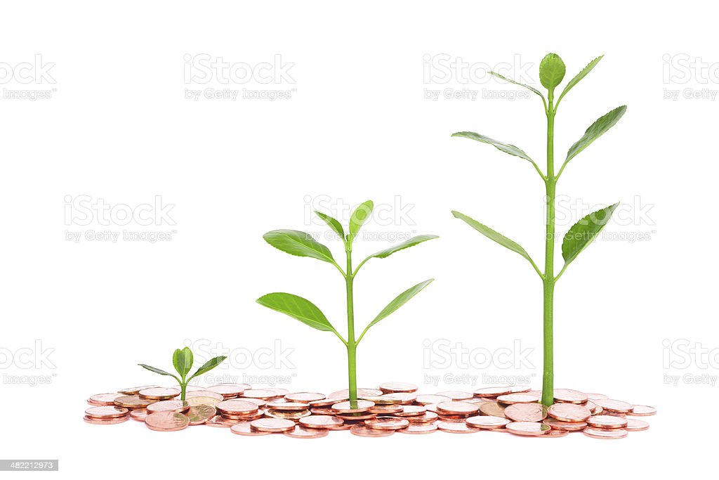 growing plant sequence in coin isolated on white background stock photo