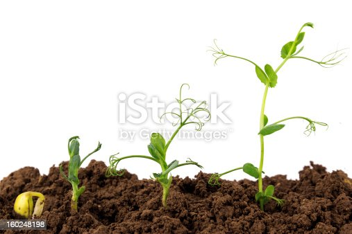 147512291 istock photo growing Plant Sequence in different stages 160248198