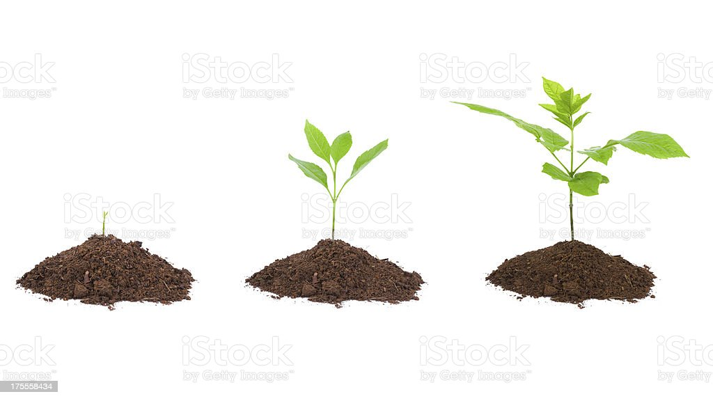 growing plant sequence in dirt isolated on white background stock photo