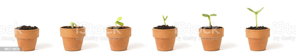 Growing Plant Sequence royalty-free stock photo