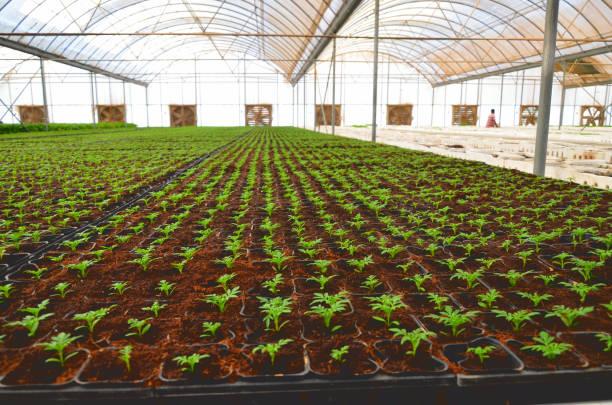 Anbau von Pflanzen in einem Klima kontrolliert innen Hof – Foto
