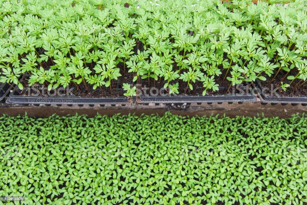 Growing plants of seedlings. stock photo